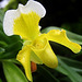 Orchid 23
