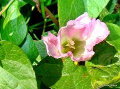An attractive wild flower