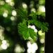 Light, Leaves & Bokeh