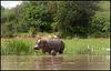 Baby hippo & mum