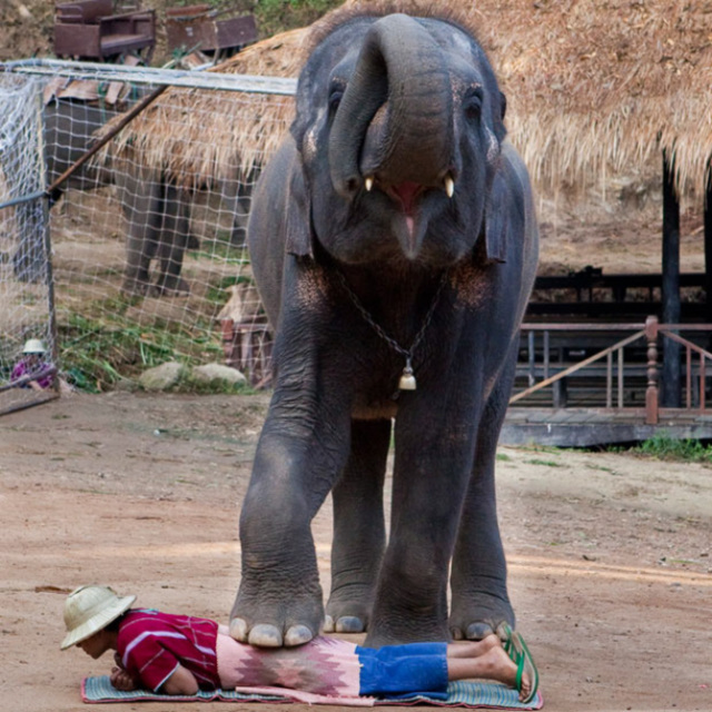 ECA 07 Thai Massage Elephant style