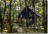 Forest hut 3 hdr