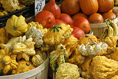 Gourds – St. Andrew Street, Toronto, Ontario
