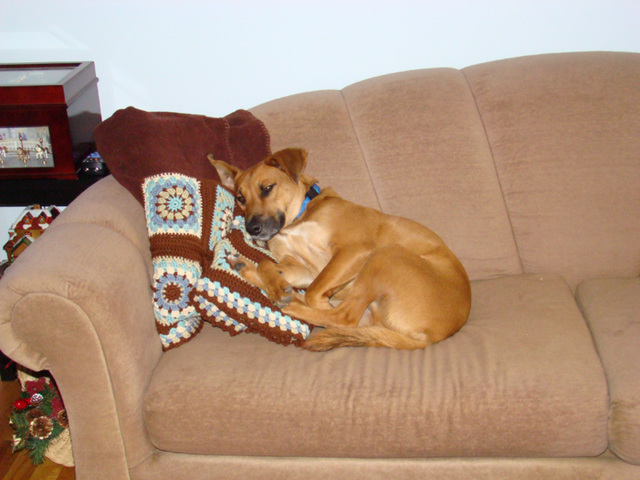 Otis on sofa with afgan