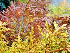 Lovely foliage