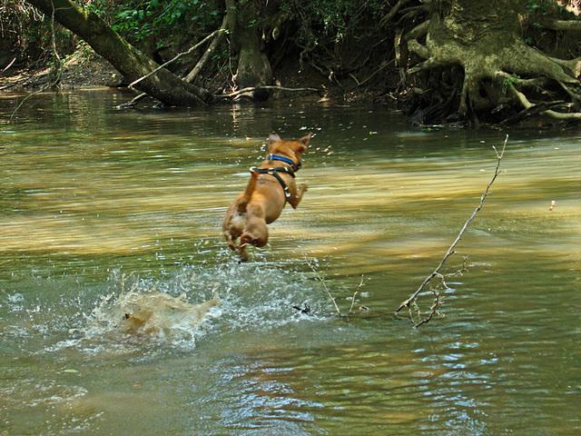 Otis - a flying leap