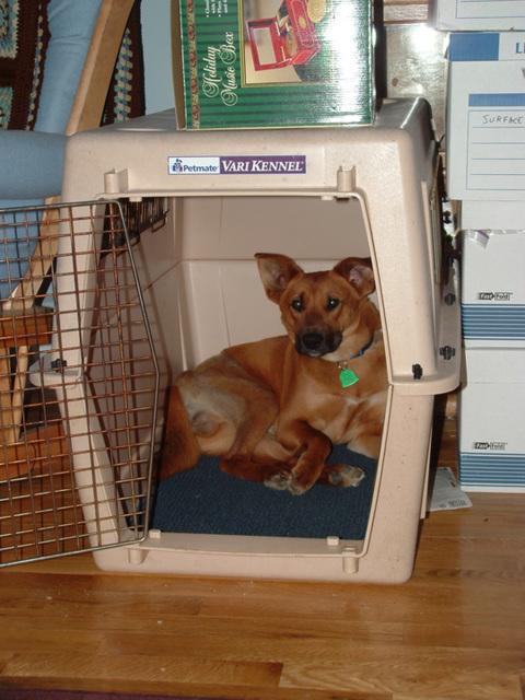 Otis in his crate