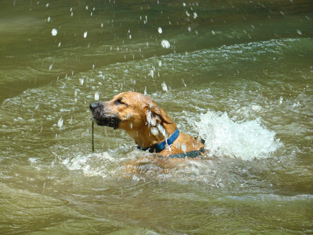 Otis swimming