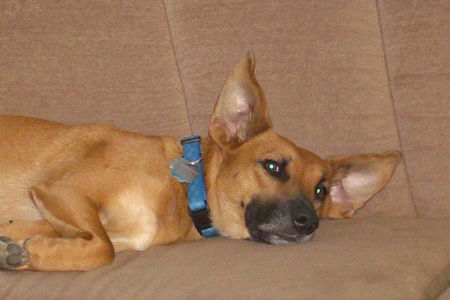 Otis relaxing