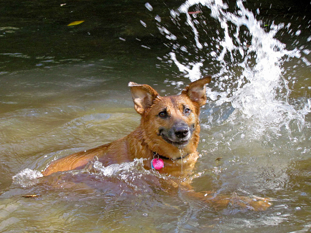 Otis Swimming