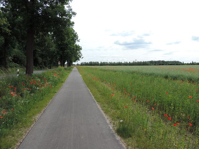 Radweg Dahlewitz - Groß Kienitz
