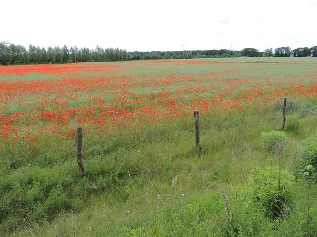 Feld bei Groß Kienitz