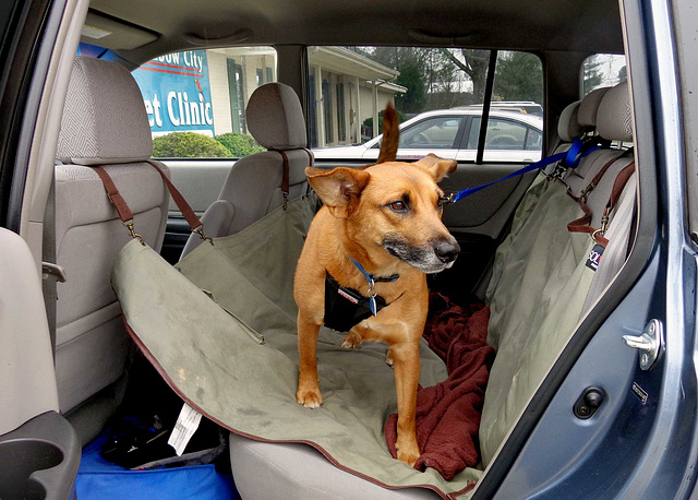 Otis in the car