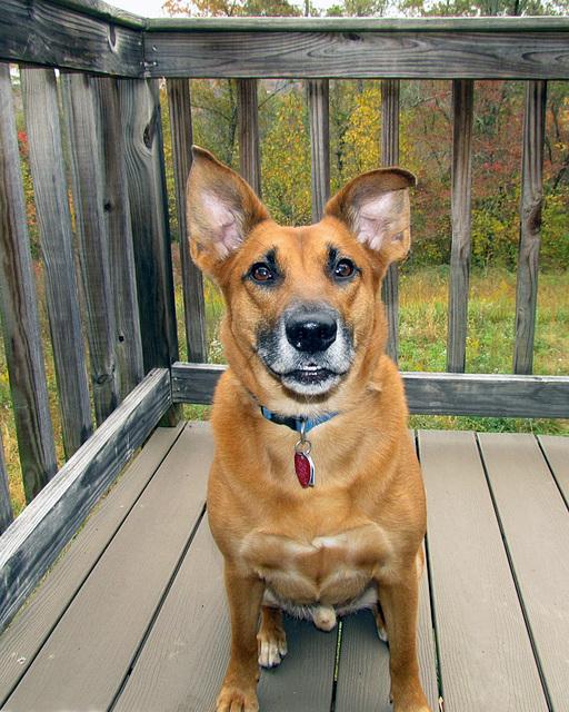 Otis Posing Nicely