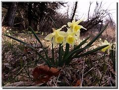 La certitude que le printemps est là ......