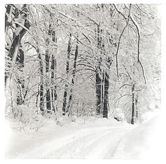 verschneiter Forstweg