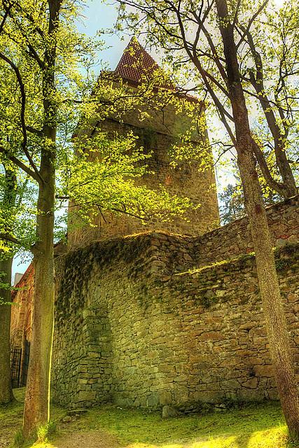 Zvíkov Castle 19