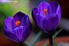 Botanic Gardens Explore 032 copy2
