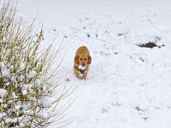 Snow Dog 3