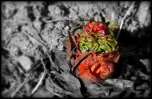 L'esprit de la rhubarbe