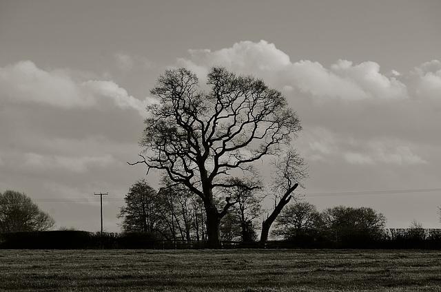 Staffordshire fields, Haughton