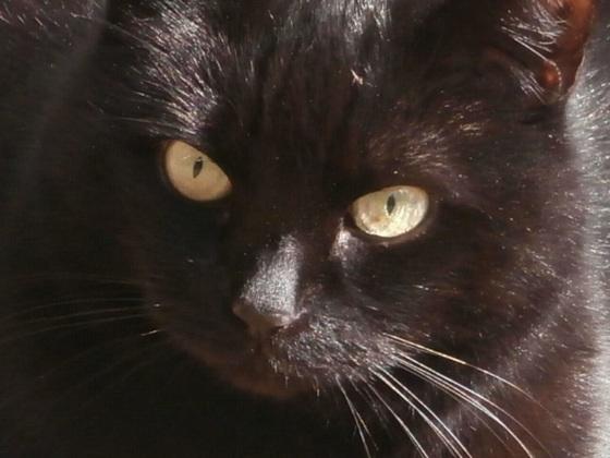 Boo is quite a pretty cat