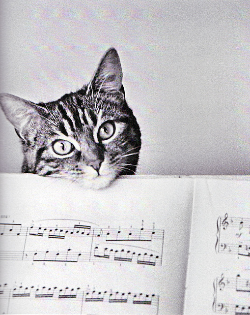 chat musicien