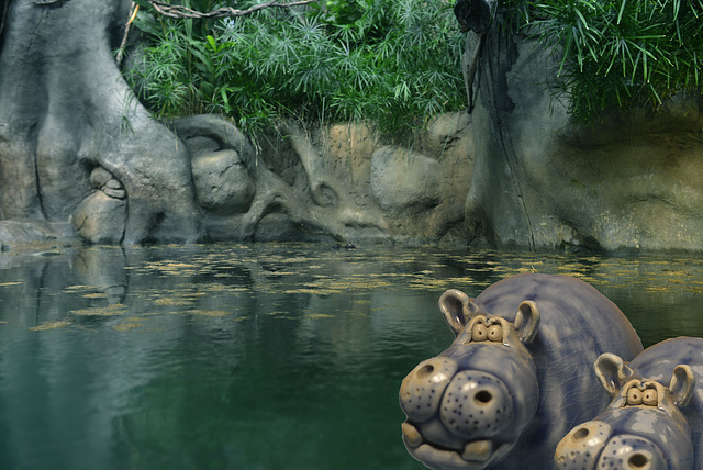 no hippos were spotted upon the visit to the zoo?