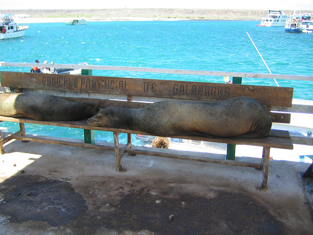 Sealions on the bench