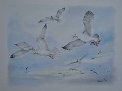 Pastel painting, seagulls