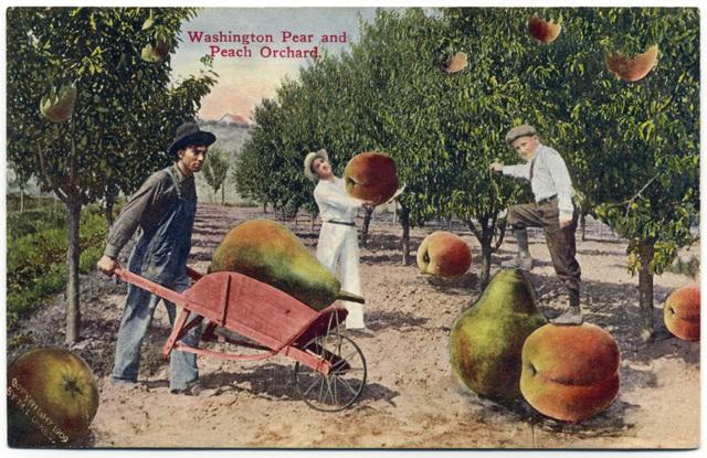 Washington Pear and Peach Orchard