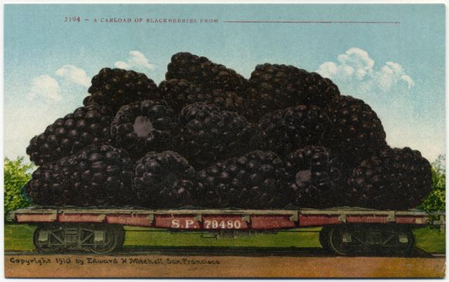 A Carload of Blackberries