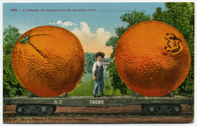 A Carload of Mammoth Navel Oranges