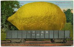 I'm Sending You a Lemon