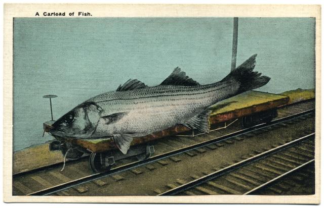 A Carload of Fish