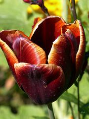 Une tulipe chocolat pour vous souhaiter de joyeuses Pâques