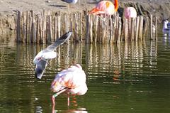 Parc aux oiseaux - Villars les Dombes - Ain