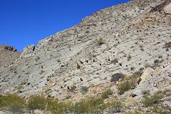 Limestone and barrel cactus