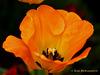 Botanic Gardens Dublin Explore 106 copy