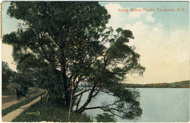 Along Milton Ponds, Yarmouth, N.S.