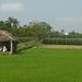 Landleben bei Hoi An
