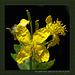 Eine kleine gelbe Blume auf der Gartenmauer