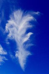 Pluma en el cielo
