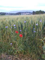 Montoison Drôme