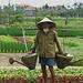 am Wegesrand im ländlichen Vietnam