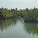 Boot unterwegs zur Ernte der Wasserpalmenblätter