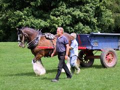 Heavy Horse at Singleton