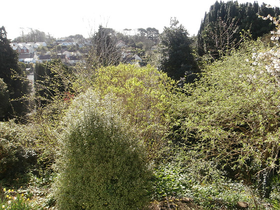 My garden is full of trees. The dark trees denote the end of my garden