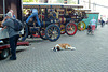 Dordt in Stoom 2014 – Dog run out of steam