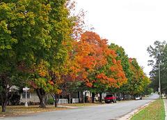 Street in Fall